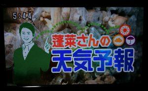 蓬莱さんの天気予報 滋賀県竜王町より生中継