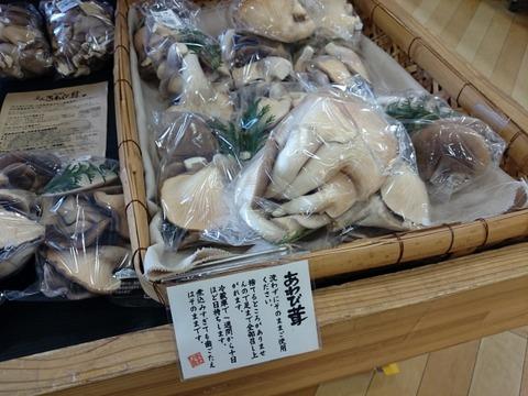 27b97b70 s - 6/6(土)あわび茸の試食販売